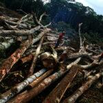 Desmatamento na Amazônia em 2020 já é o maior dos últimos 12 anos